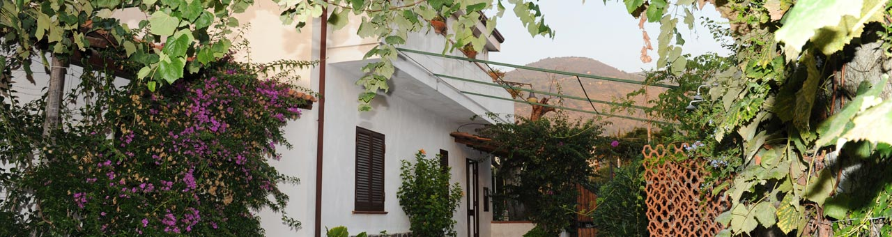 Pet friendly holiday home palinuro